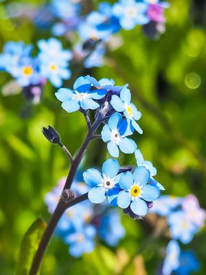 Summer blooming flower