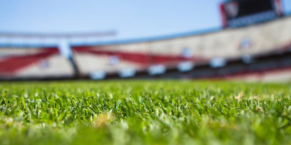 Stadium sports field grass